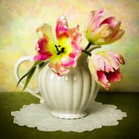 Parrot Tulips and White Pitcher